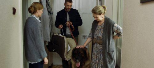 Сериал «Год собаки»: содержание, чем закончится, актеры и роли